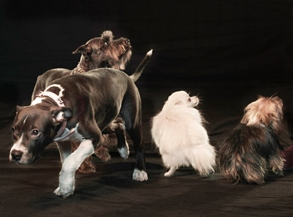 Snoops Dogs, Group 2