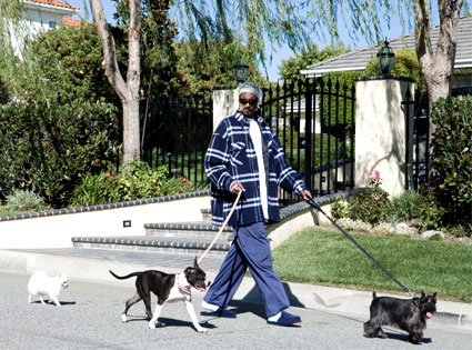 Snoop Dogg and his dogs
