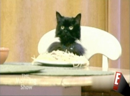 The Soup Spaghetti Cat