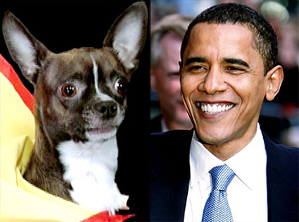 Lou the Chihuahua, Barack Obama