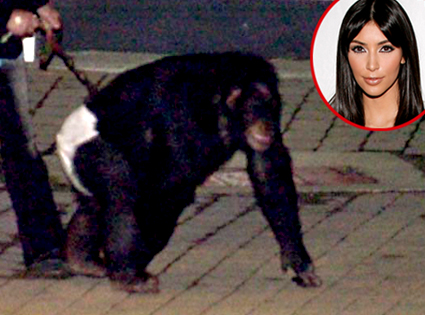 Killer Chimp, Kim Kardashian