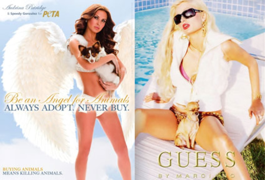 Paris Hilton, Guess Ad, Audrina Patridge, Peta Ad