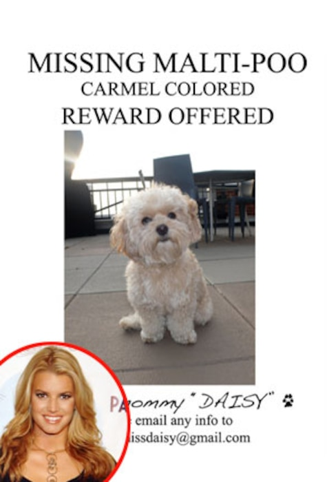 Jessica Simpson, Twitter daisy lost poster