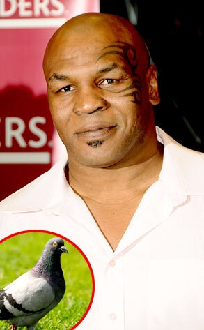 Mike Tyson, Pigeon