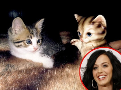 Whose Celebrity Pet, Katy Perrt
