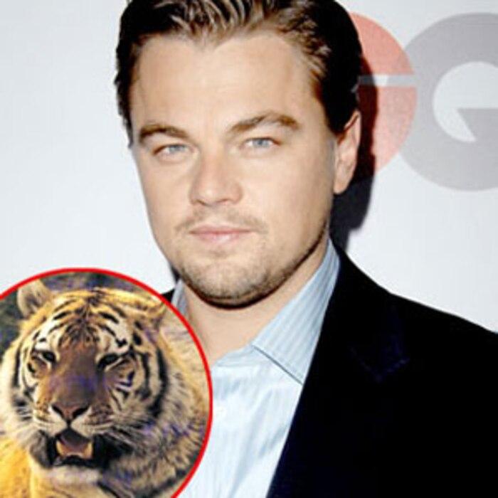 Leonardo DiCaprio, Tiger