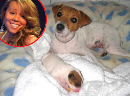 Mariah Carey, new puppy