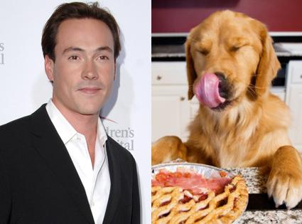 Chris Klein, Golden Retriever, Dog, Pie