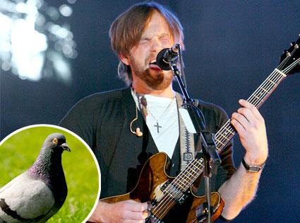 Caleb Followill, Pigeon