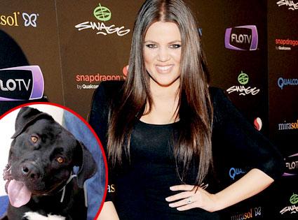 Khloe Kardashian Odom, Fred the Dog
