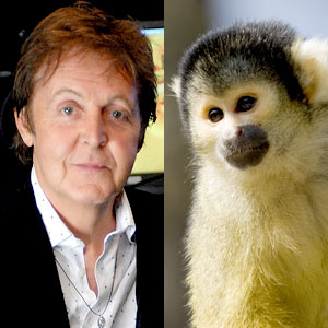 Paul McCartney, Squirrel Monkey