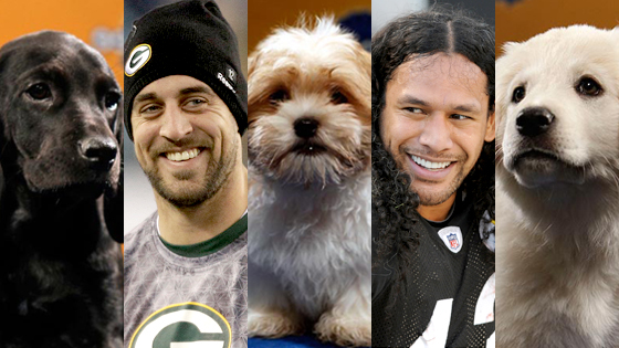 Puppy Bowl, Aaron Rogers, Troy Polamalu