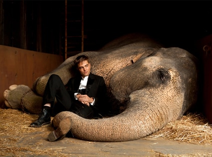 Water for Elephants, Robert Pattinson