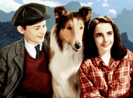 Elizabeth Taylor, Roddy McDowell, Lassie