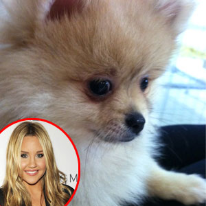Amanda Bynes, New Puppy