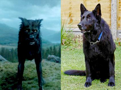 Harry Potter, Padfoot, Dog