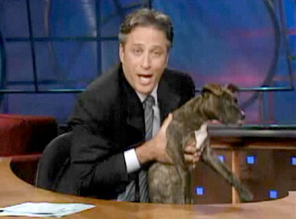 Jon Stewart, The Daily Show, Puppy