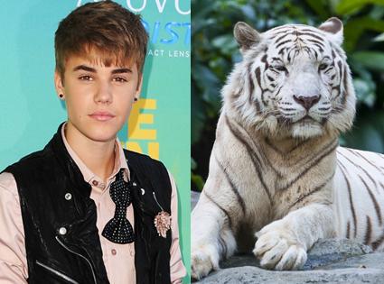 Justin Bieber, White Tiger