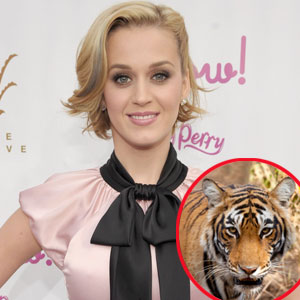 Panthera, Katy Perry