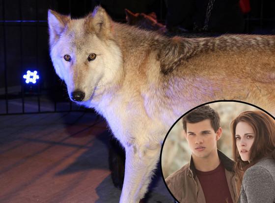 White Wolf, Breaking Dawn