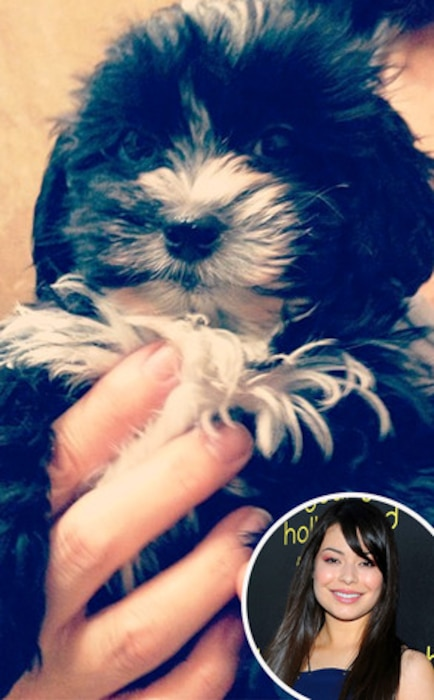 Miranda Cosgrove, Puppy, Instagram