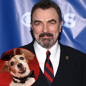 Tom Selleck, Uggie