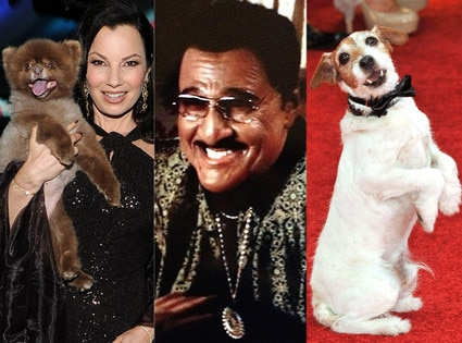 Fran Drescher, Uggie, Billy Crystal