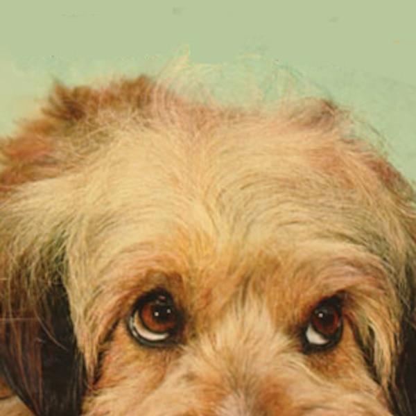 Benji Faze Rug Dog Breed: Higgins & Benjean From Dog Stars: Celebrity Canines