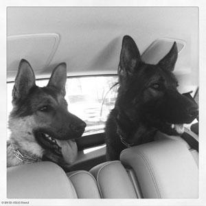 Nikki Reed, Paul McDonald Dogs