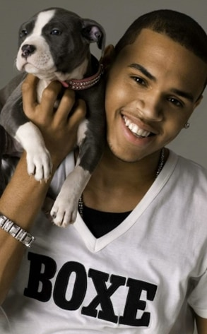 Chris Brown, Puppy