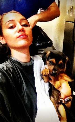 Miley Cyrus, Puppy