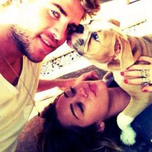 Miley Cyrus, Liam Hemsworth, Ziggy