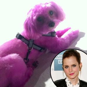 Emma Watson, Pink Dog