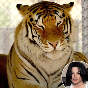 Michael Jackson, Thriller, Tiger