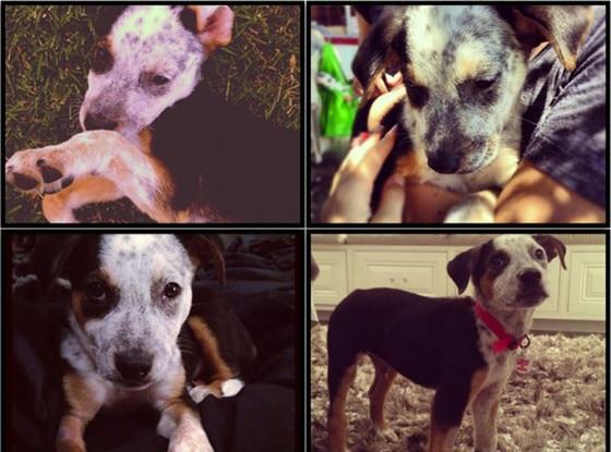 Khloe Kardashian, Jenner, Puppy