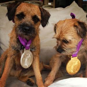 Andy Murray, Dog