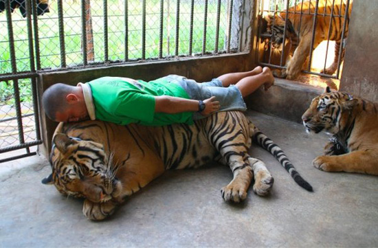 Tiger Planking Soup X2