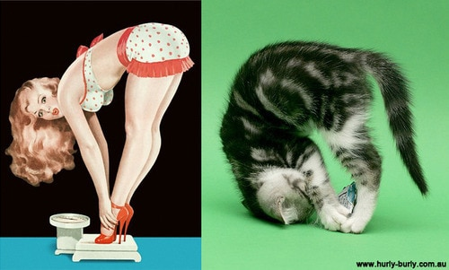 Cats That Look Like Pin-Up Girls