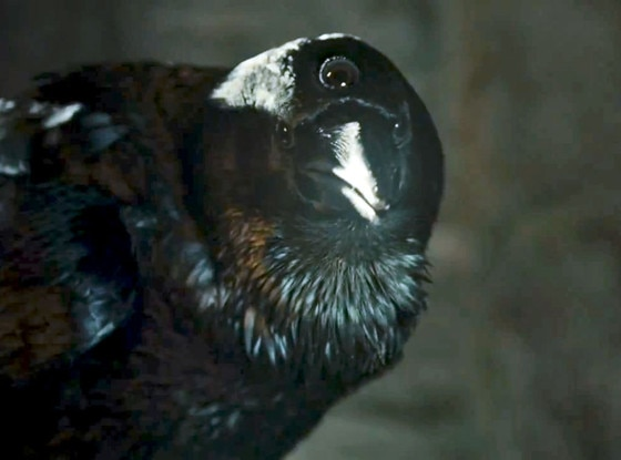 Raven, Game of Thrones
