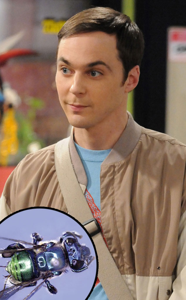 Jim Parsons, Big Bang Theory, Euglossa bazinga bee