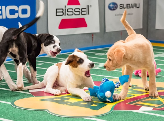 Puppies, Puppy Bowl