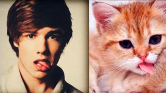 One Direction Cats