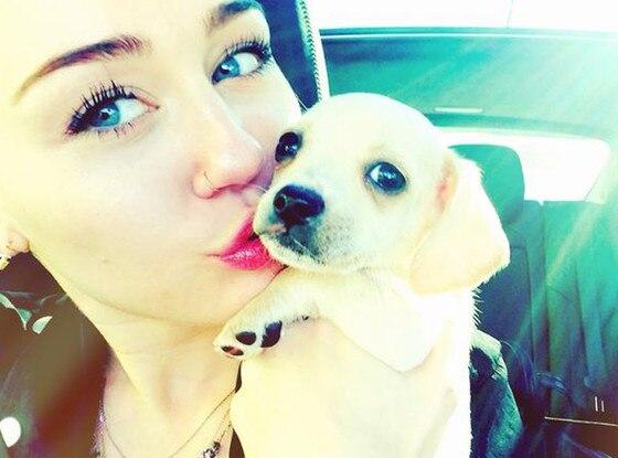 Miley Cyrus, Bean
