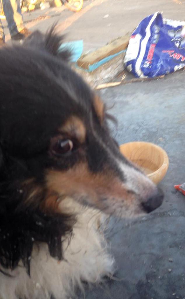 Maggie, Tornado Dog