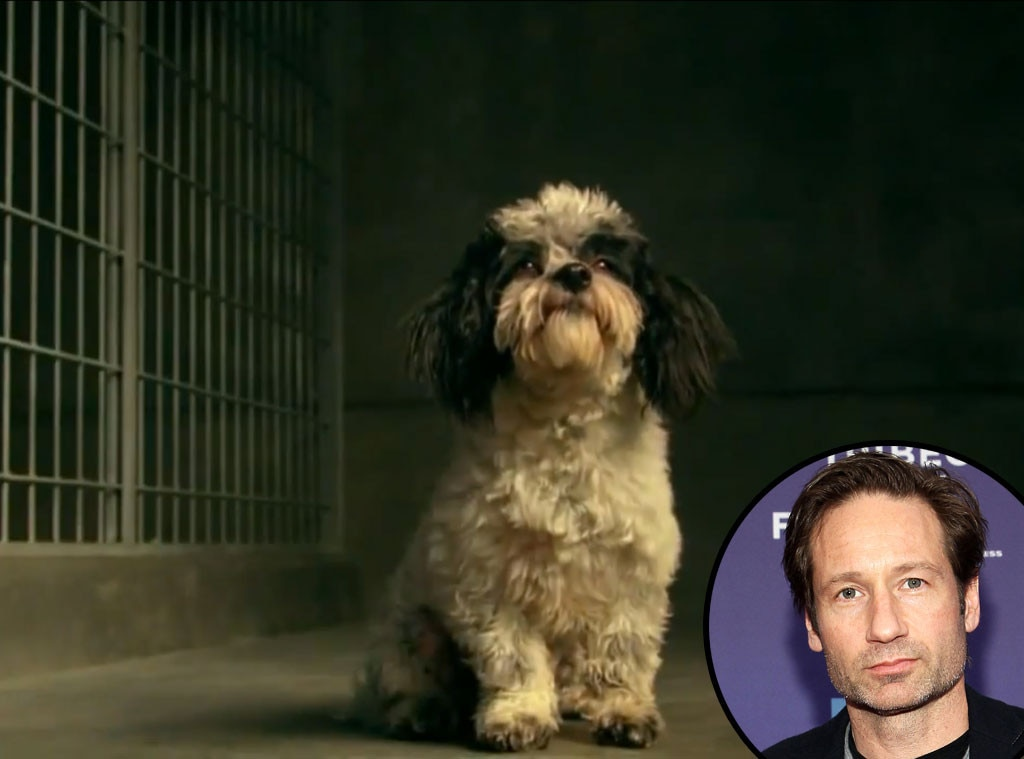 Celebrity Voiceovers, David Duchovny, Pedigree