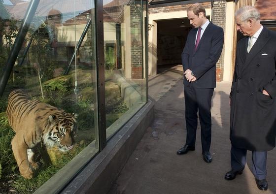 Prince William, Prince Charles, Tiger