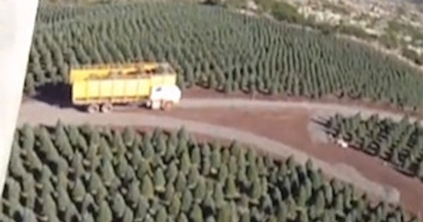 This Is Where Your Christmas Trees Come From E News