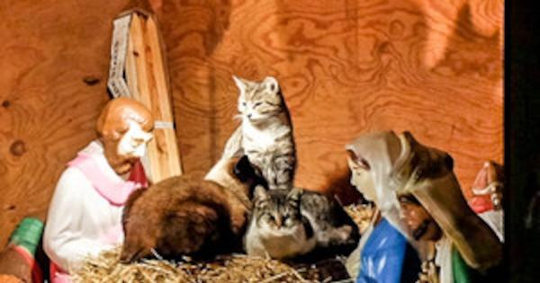 Cats Take Over Local Nativity Scene Have No Problem
