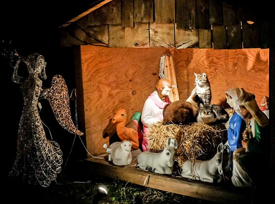 Cats in Brooklyn Manger