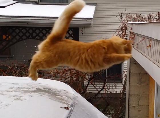 Waffles the Cat, Jump Fail